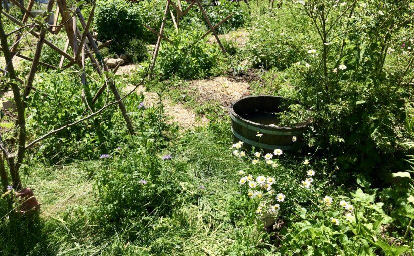 Unser wilder Garten Juni 2020